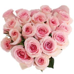 Standard-Rose-Nena-Top-350_43609e29